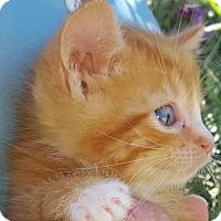 Adopt A Pet :: Pembroke - Stanford, CA