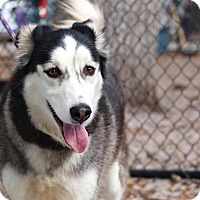 Adopt A Pet :: Apollo - Clearwater, FL