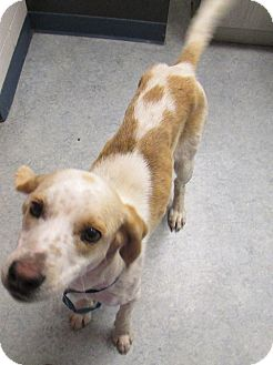 Hound (Unknown Type) Mix Dog for adoption in Warrenton, North Carolina - Max