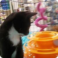 Adopt A Pet :: Pepper - Columbus, OH