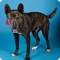 Adopt A Pet :: Theo - Irving, TX