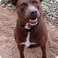 Adopt A Pet :: Colt - Georgetown, TX