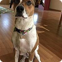 Adopt A Pet :: Margie - Portland, OR