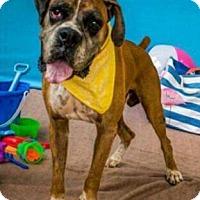 Adopt A Pet :: Charger - Austin, TX