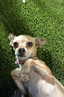 Mixed Breed (Small) Mix Dog for adoption in Meridian, Idaho - Nevaeh