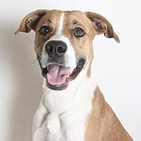 Adopt A Pet :: Blaze - Redding, CA