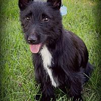 Adopt A Pet :: Louise - Omaha, NE