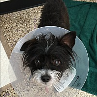 Adopt A Pet :: Jagger - Thousand Oaks, CA