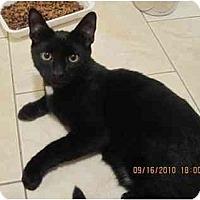 Adopt A Pet :: Black Magic - Bayonne, NJ
