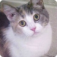 Adopt A Pet :: Sunshine - Burgaw, NC