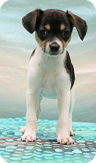 Yorkie, Yorkshire Terrier/Beagle Mix Puppy for adoption in Staunton, Virginia - Jada