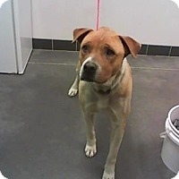 Adopt A Pet :: Chandler - Farmington, NM