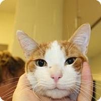 Adopt A Pet :: Kramer - Philadelphia, PA