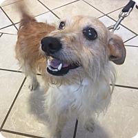 Adopt A Pet :: Benny - DuQuoin, IL