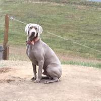Adopt A Pet :: Spike - Manassas Park, VA
