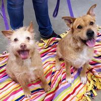 Adopt A Pet :: Bacardi - Twinsburg, OH