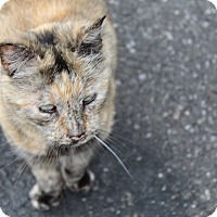 Adopt A Pet :: Tori - Islip, NY