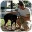Photo 2 - Rottweiler Dog for adoption in Santa Barbara, California - Maya