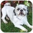 Photo 2 - Shih Tzu Dog for adoption in Los Angeles, California - HOOPER