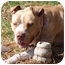 Photo 3 - American Pit Bull Terrier Mix Dog for adoption in West Los Angeles, California - Buford