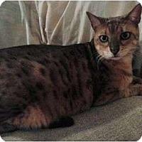 Adopt A Pet :: Lily - Lantana, FL