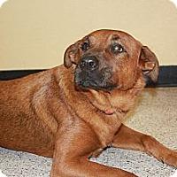 Adopt A Pet :: Scarlet - Phoenix, AZ