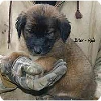 Adopt A Pet :: Brier - New Boston, NH