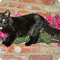 Adopt A Pet :: Cole - Lafayette, CA