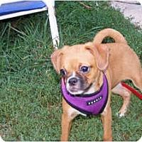 Adopt A Pet :: PEANUT - Warren, NJ
