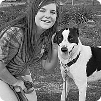 Adopt A Pet :: Wendi - Albany, NY
