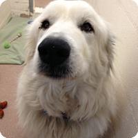 Adopt A Pet :: Lou 2014 - Lee, MA