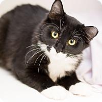 Adopt A Pet :: Russell - Fountain Hills, AZ