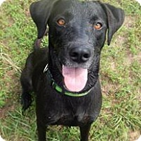 Adopt A Pet :: Boomer - Charleston, AR