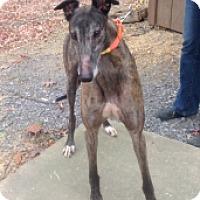 Adopt A Pet :: WW's Nava - Gerrardstown, WV