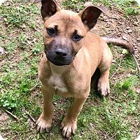 Adopt A Pet :: Walter - so cute - Stamford, CT
