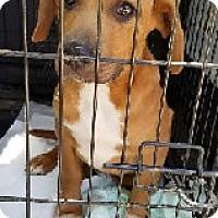 Adopt A Pet :: Andy - Avon, NY