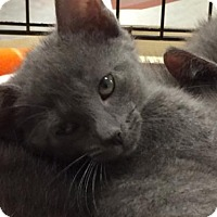 Adopt A Pet :: Cosmo - Knoxville, TN
