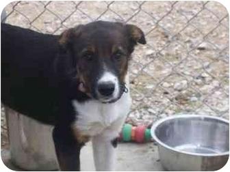 German Shepherd Dog Mix Dog for adoption in Cold Lake, Alberta - Nixon