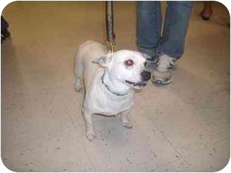 Terrier (Unknown Type, Small) Mix Dog for adoption in Howell, Michigan - Lola