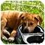 Photo 3 - Collie/Labrador Retriever Mix Puppy for adoption in Naperville, Illinois - Bandit