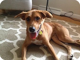 Retriever (Unknown Type) Mix Dog for adoption in Northville, Michigan - Sasha -Pending