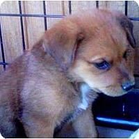 Adopt A Pet :: LEGO - Gilbert, AZ