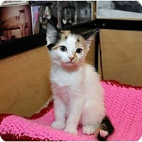 Adopt A Pet :: Khloe - Farmingdale, NY