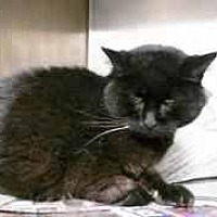 Adopt A Pet :: lolita - Prestonsburg, KY