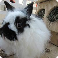 Adopt A Pet :: Armani - Newport, DE