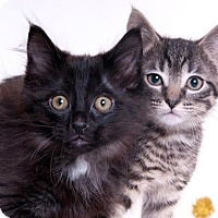 Adopt A Pet :: Jared & Licorice - Chicago, IL