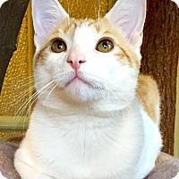 Adopt A Pet :: George - Columbia, MD