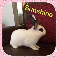 Adopt A Pet :: Sunshine - Los Angeles, CA
