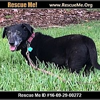 Dachshund Mix Dog for adoption in hollywood, Florida - suni Lou