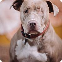 Adopt A Pet :: Portia - Portland, OR